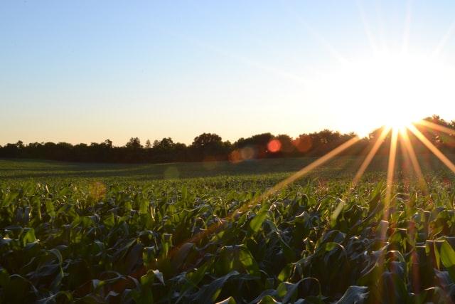 สินเชื่อ ธกส 2564 ยืมเงินด่วน 10000 - 50000 กับธนาคารเพื่อการเกษตร
